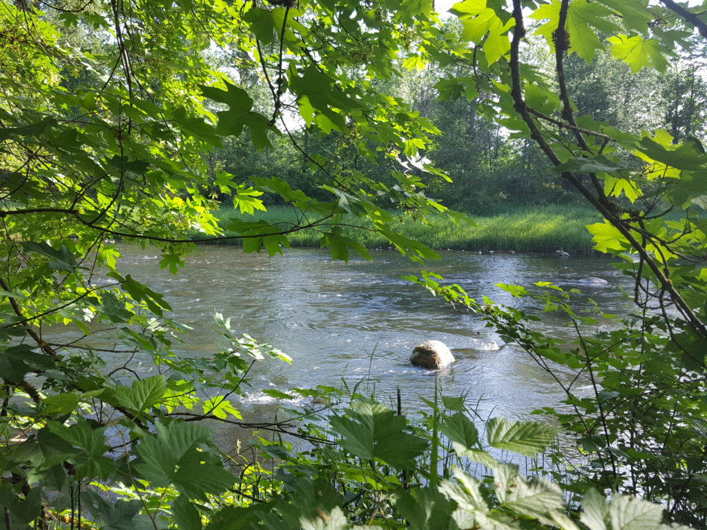 Ecosystem services nisqually land trust for Nisqually river fishing