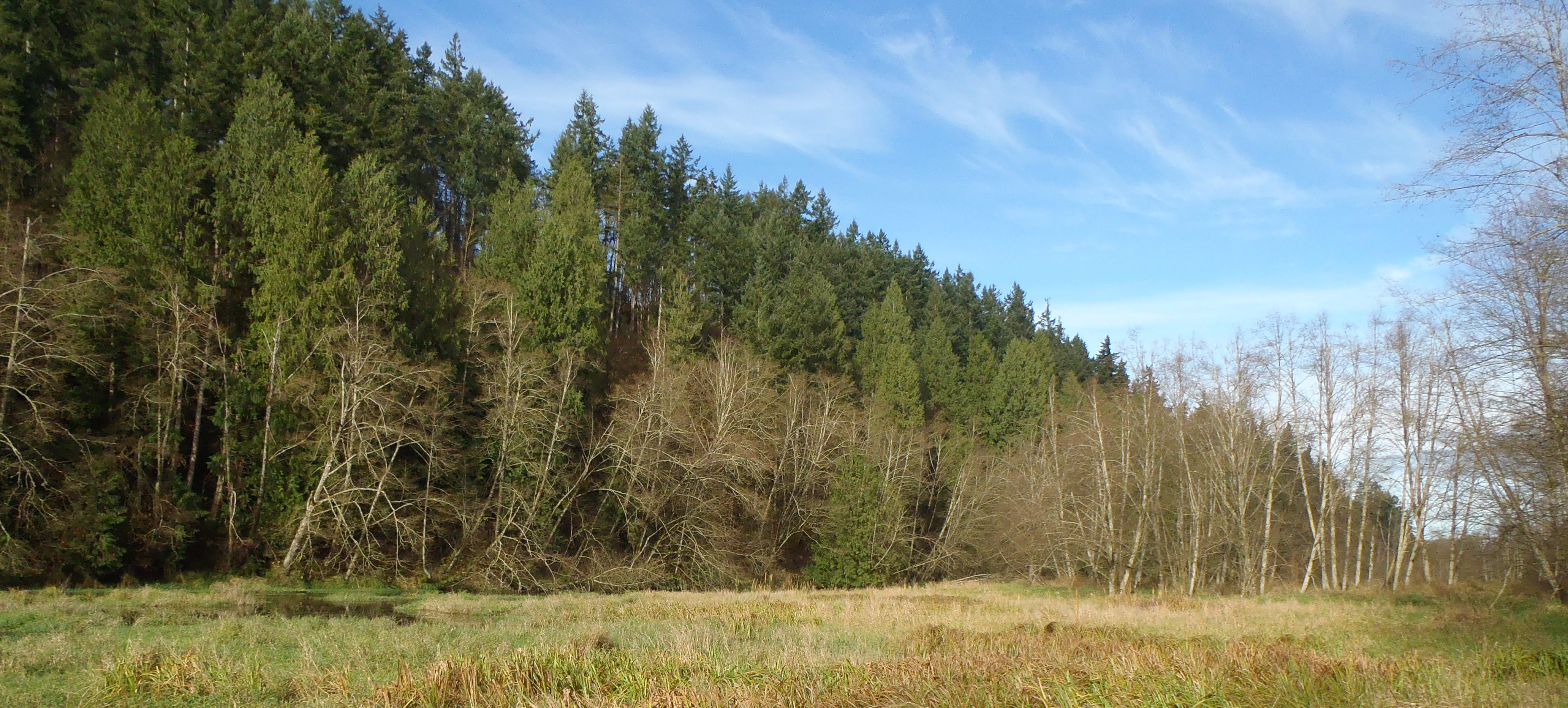 Nisqually River Side Channel at Thurston Ridge